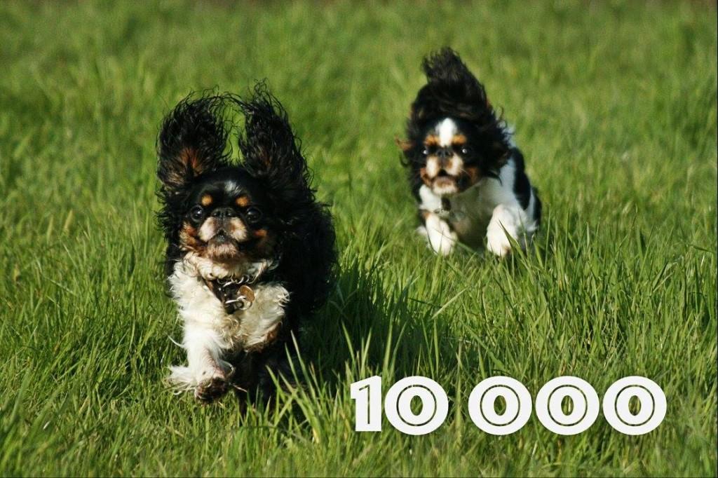 10 000 fanów